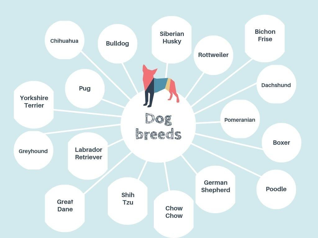 bubble map of dog breed
