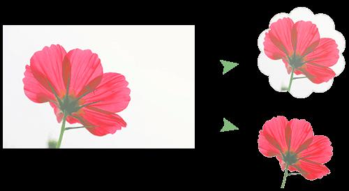 imagen de cultivo infográfico