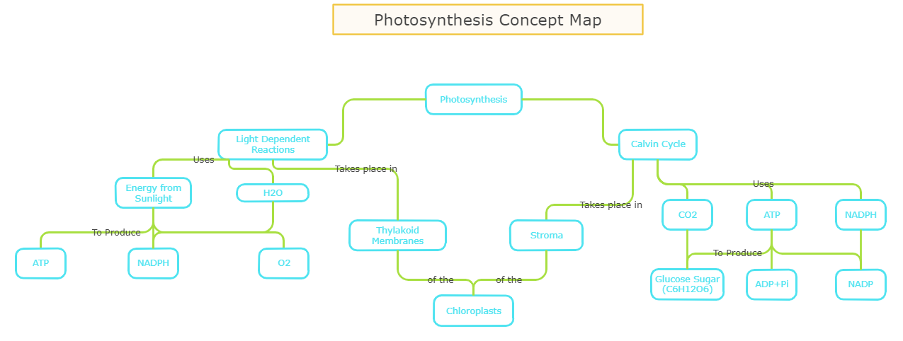 photosynthesis-concept-map