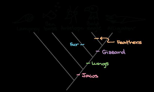 Animal Phylogenetic Tree