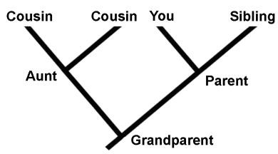 Human Phylogenetic Tree
