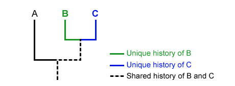See the Shared Ancestry Between Lineages (If Any)