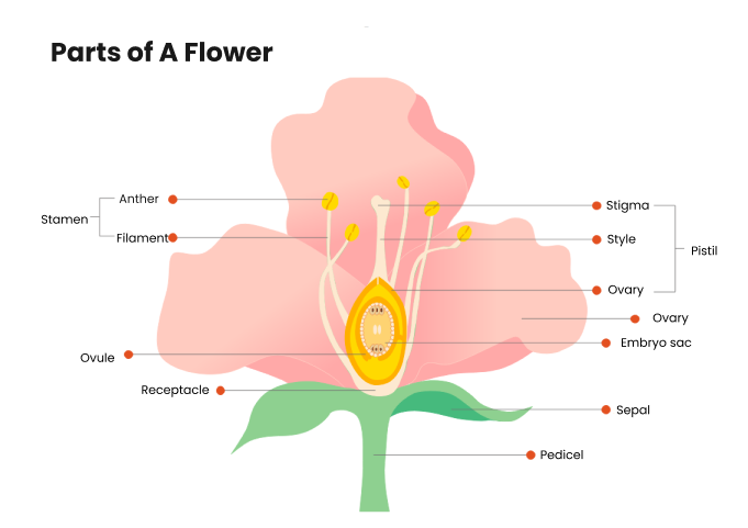 parts of a flower diagram