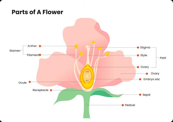 partes de um diagrama de flor