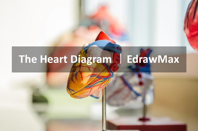 diagramme cardiaque