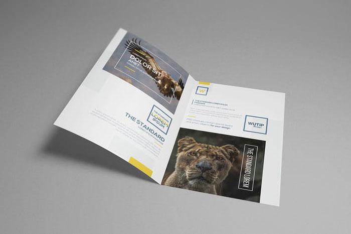 Gate Fold of Brochure