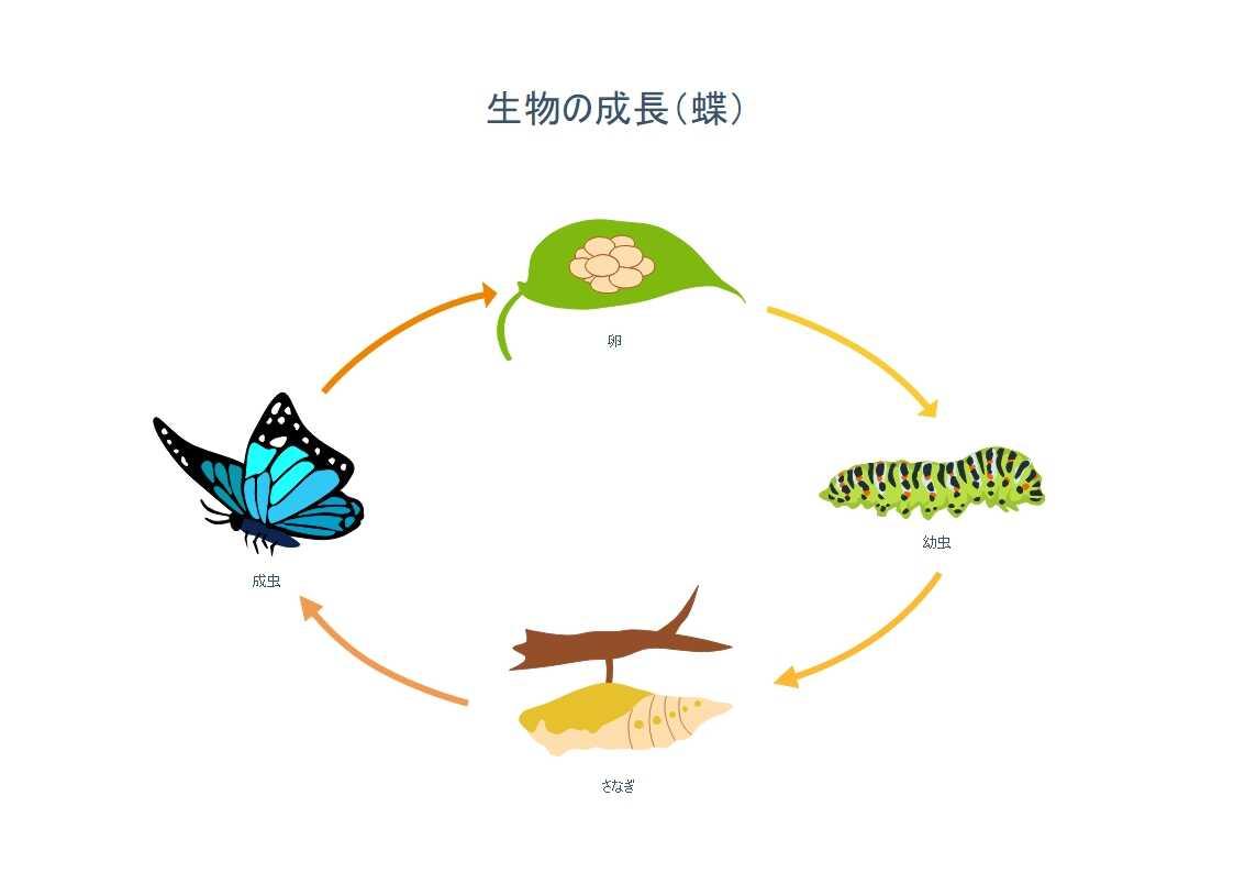 生物の成長