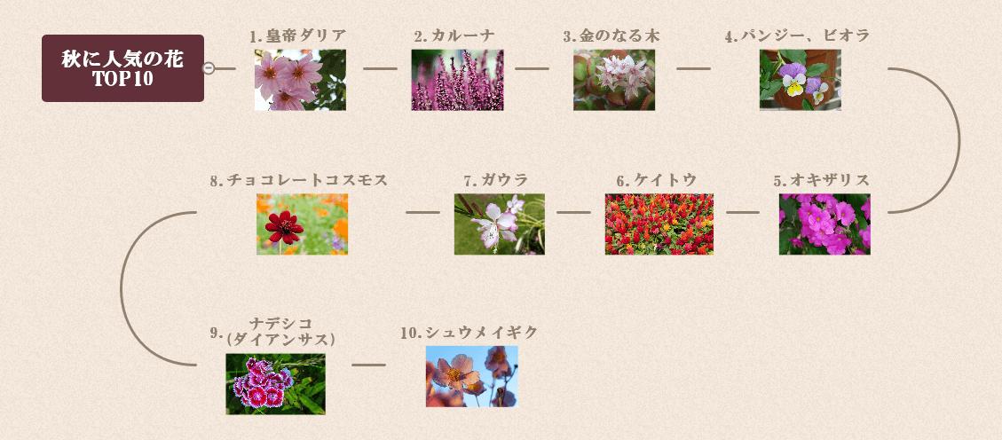 秋に咲く花