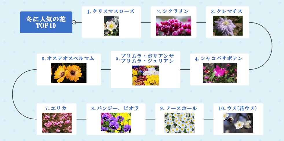 冬に咲く花